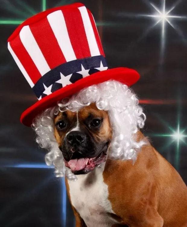 Vote Dog Buzzfeed enhanced-buzz-8457-1372697855-23